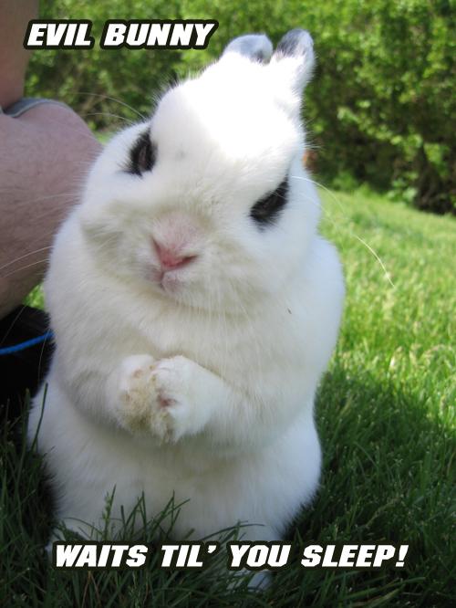 evil-bunny.jpg
